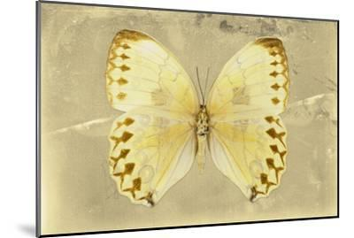 Miss Butterfly Formosana - Yellow-Philippe Hugonnard-Mounted Photographic Print