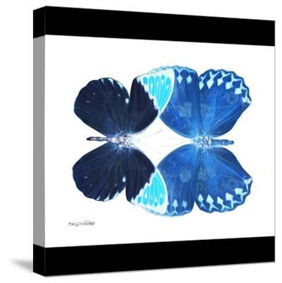 Miss Butterfly Duo Formoia Sq - X-Ray B&W Edition-Philippe Hugonnard-Stretched Canvas Print