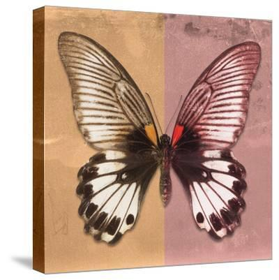Miss Butterfly Agenor Sq - Orange & Red-Philippe Hugonnard-Stretched Canvas Print