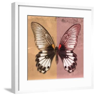 Miss Butterfly Agenor Sq - Orange & Red-Philippe Hugonnard-Framed Photographic Print
