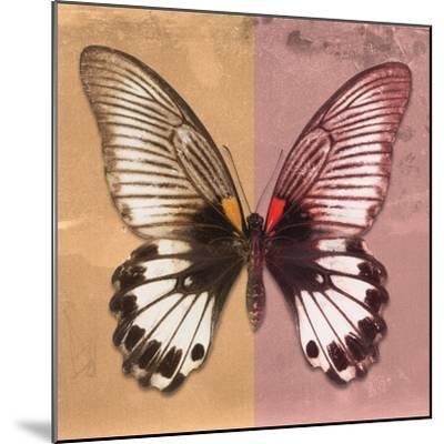 Miss Butterfly Agenor Sq - Orange & Red-Philippe Hugonnard-Mounted Photographic Print