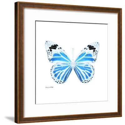 Miss Butterfly Genutia Sq - X-Ray White Edition-Philippe Hugonnard-Framed Photographic Print