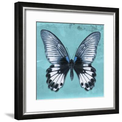 Miss Butterfly Agenor Sq - Turquoise-Philippe Hugonnard-Framed Photographic Print