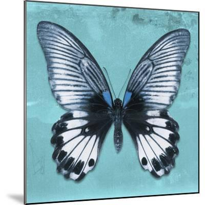 Miss Butterfly Agenor Sq - Turquoise-Philippe Hugonnard-Mounted Photographic Print