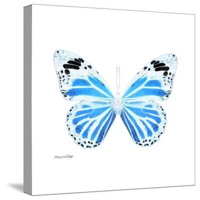 Miss Butterfly Genutia Sq - X-Ray White Edition-Philippe Hugonnard-Stretched Canvas Print