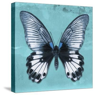Miss Butterfly Agenor Sq - Turquoise-Philippe Hugonnard-Stretched Canvas Print