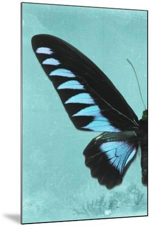 Miss Butterfly Brookiana Profil - Turquoise-Philippe Hugonnard-Mounted Photographic Print