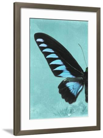 Miss Butterfly Brookiana Profil - Turquoise-Philippe Hugonnard-Framed Photographic Print