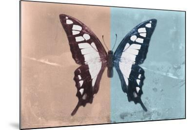 Miss Butterfly Cloanthus - Coral & Turquoise-Philippe Hugonnard-Mounted Photographic Print