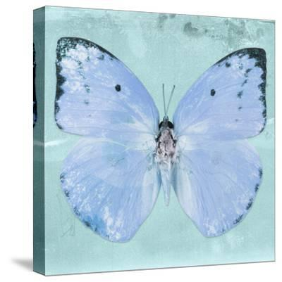 Miss Butterfly Catopsilia Sq - Turquoise-Philippe Hugonnard-Stretched Canvas Print