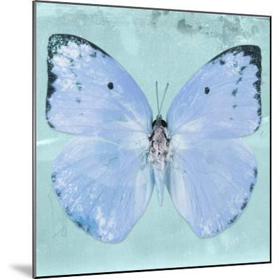 Miss Butterfly Catopsilia Sq - Turquoise-Philippe Hugonnard-Mounted Photographic Print