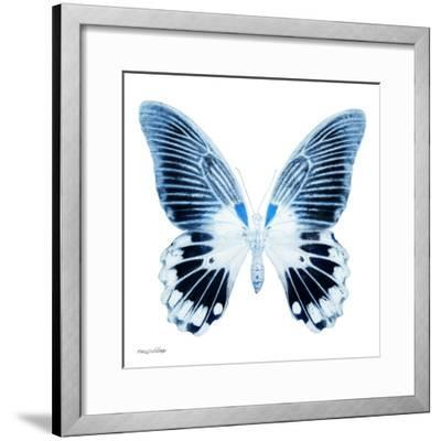 Miss Butterfly Agenor Sq - X-Ray White Edition-Philippe Hugonnard-Framed Photographic Print