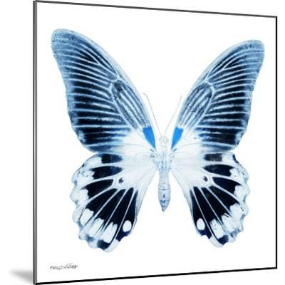 Miss Butterfly Agenor Sq - X-Ray White Edition-Philippe Hugonnard-Mounted Photographic Print