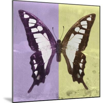 Miss Butterfly Cloanthus Sq - Mauve & Yellow-Philippe Hugonnard-Mounted Photographic Print