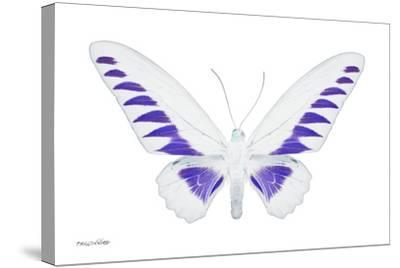 Miss Butterfly Brookiana - X-Ray White Edition-Philippe Hugonnard-Stretched Canvas Print