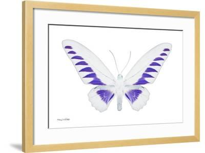 Miss Butterfly Brookiana - X-Ray White Edition-Philippe Hugonnard-Framed Photographic Print