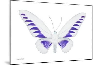 Miss Butterfly Brookiana - X-Ray White Edition-Philippe Hugonnard-Mounted Photographic Print