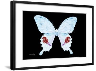 Miss Butterfly Hermosanus - X-Ray Black Edition-Philippe Hugonnard-Framed Photographic Print