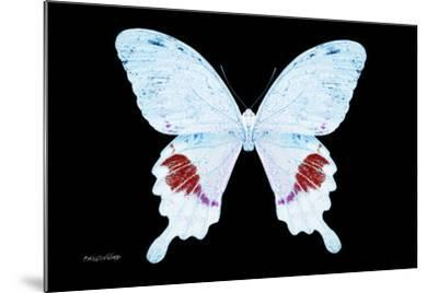 Miss Butterfly Hermosanus - X-Ray Black Edition-Philippe Hugonnard-Mounted Photographic Print