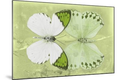 Miss Butterfly Duo Formoia - Lime Green-Philippe Hugonnard-Mounted Photographic Print