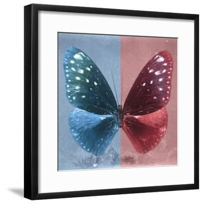 Miss Butterfly Euploea Sq - Blue & Red-Philippe Hugonnard-Framed Photographic Print