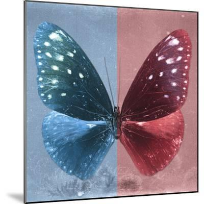 Miss Butterfly Euploea Sq - Blue & Red-Philippe Hugonnard-Mounted Photographic Print