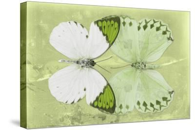 Miss Butterfly Duo Formoia - Lime Green-Philippe Hugonnard-Stretched Canvas Print