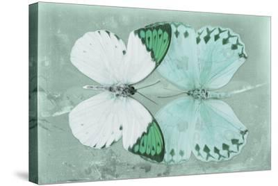 Miss Butterfly Duo Formoia - Coral Green-Philippe Hugonnard-Stretched Canvas Print