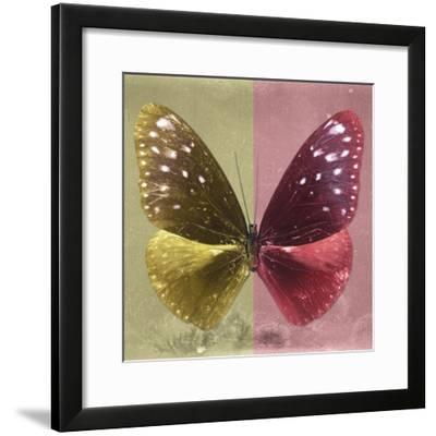 Miss Butterfly Euploea Sq - Gold & Red-Philippe Hugonnard-Framed Photographic Print