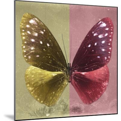 Miss Butterfly Euploea Sq - Gold & Red-Philippe Hugonnard-Mounted Photographic Print
