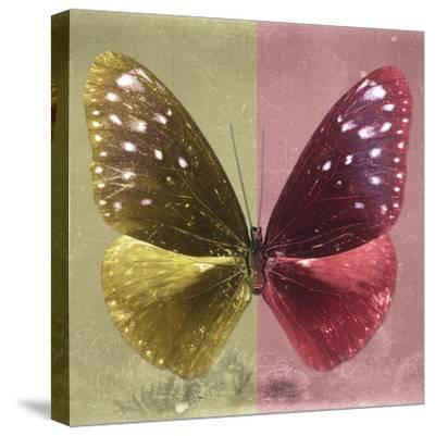 Miss Butterfly Euploea Sq - Gold & Red-Philippe Hugonnard-Stretched Canvas Print