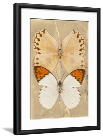 Miss Butterfly Duo Formoia II - Dark Yellow-Philippe Hugonnard-Framed Photographic Print