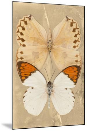 Miss Butterfly Duo Formoia II - Dark Yellow-Philippe Hugonnard-Mounted Photographic Print