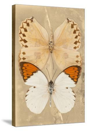 Miss Butterfly Duo Formoia II - Dark Yellow-Philippe Hugonnard-Stretched Canvas Print