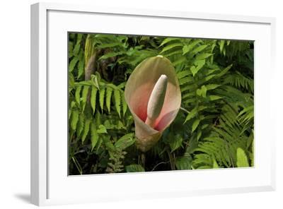 A Voodoo Lily In Kaziranga National Park-Steve Winter-Framed Photographic Print