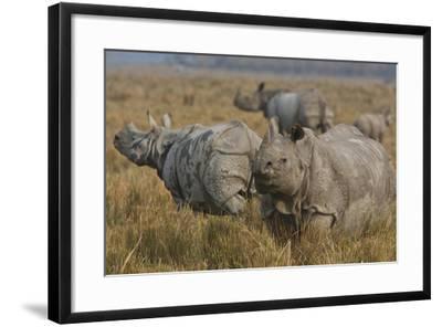 One-Horned Indian Rhinoceroses In Kaziranga National Park-Steve Winter-Framed Photographic Print