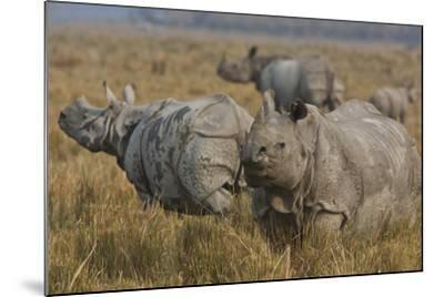 One-Horned Indian Rhinoceroses In Kaziranga National Park-Steve Winter-Mounted Photographic Print