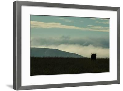 The Silhouette Of An African Buffalo Standing In Kenya's Masai Mara National Reserve-Beverly Joubert-Framed Photographic Print