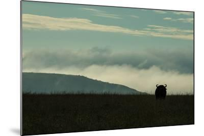 The Silhouette Of An African Buffalo Standing In Kenya's Masai Mara National Reserve-Beverly Joubert-Mounted Photographic Print