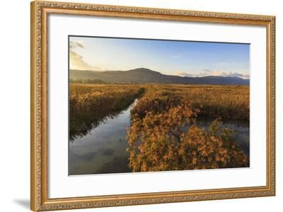Hula Nature Reserve In Evening Light. Hula Valley. Israel-Oscar Dominguez-Framed Photographic Print