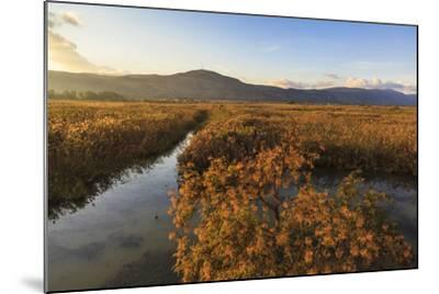 Hula Nature Reserve In Evening Light. Hula Valley. Israel-Oscar Dominguez-Mounted Photographic Print