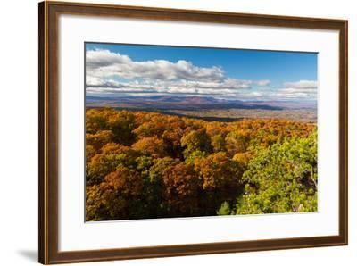 Forest Of Autumn Leaves Below The Bonticou Crag Trail In Shawangunk Mts. Mohonk Preserve, New York-Mike Cavaroc-Framed Photographic Print