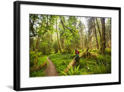 Woman Pauses For A Drink Of Water Along The Bogachiel Rain Forest Trail #825 In The Olympic NP-Ben Herndon-Framed Photographic Print
