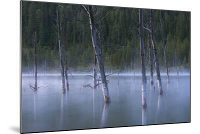 Early Morning Mist Rising Off Of Earthquake (Quake) Lake In SW Montana, Near West Yellowstone-Austin Cronnelly-Mounted Photographic Print