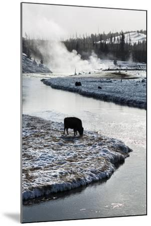 Bison Graze Along The Madison River In Yellowstone National Park In Winter-Ben Herndon-Mounted Photographic Print
