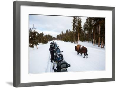 Tourists On A Snowmobile Tour In Yellowstone NP Take Smart Phone Photos If A Nearby Bison-Ben Herndon-Framed Photographic Print