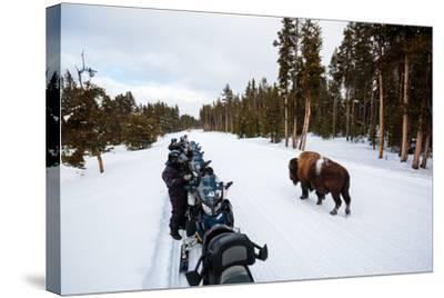 Tourists On A Snowmobile Tour In Yellowstone NP Take Smart Phone Photos If A Nearby Bison-Ben Herndon-Stretched Canvas Print