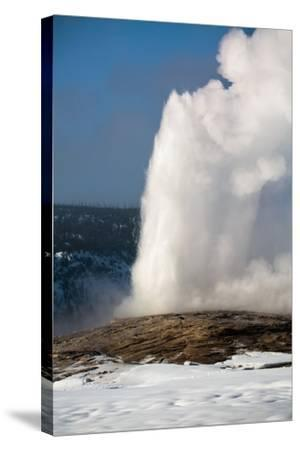 A Steamy Old Faithful In Winter In Yellowstone National Park-Ben Herndon-Stretched Canvas Print