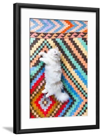 Ares, A Long Haired, White, Doll Face Persian Cat With Bi-Colored Eyes On A Colorful Rug-Ben Herndon-Framed Photographic Print
