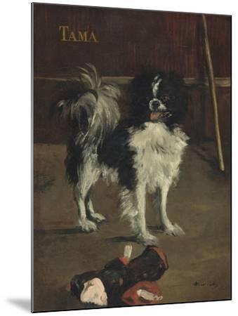 Tama, the Japanese Dog, c.1875-Edouard Manet-Mounted Giclee Print